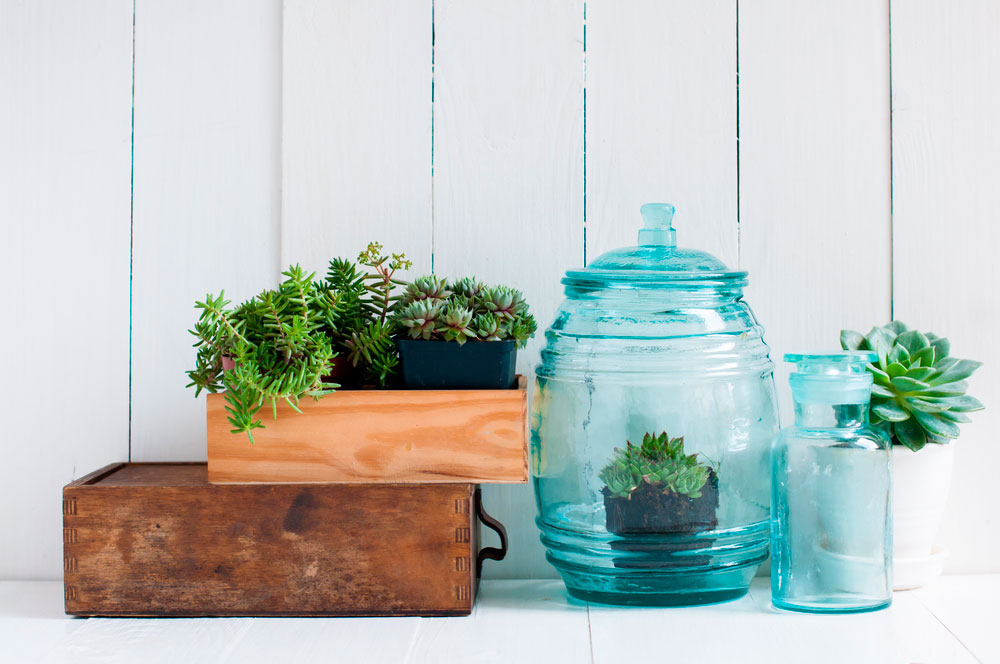 decoración-de-interiores-plantas-para-hogar